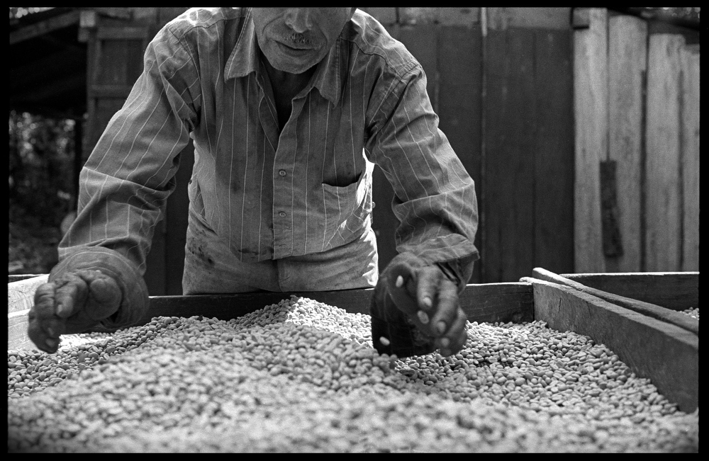 Bernabe Rodriguez Cano,55, has been farming organic coffee for the last 5 years. His 9 acre farm allows him to self sustain himself and hire some workers during the high harvest season. Organic coffe can fetch up to double the price per pound of traditional non organic coffee.