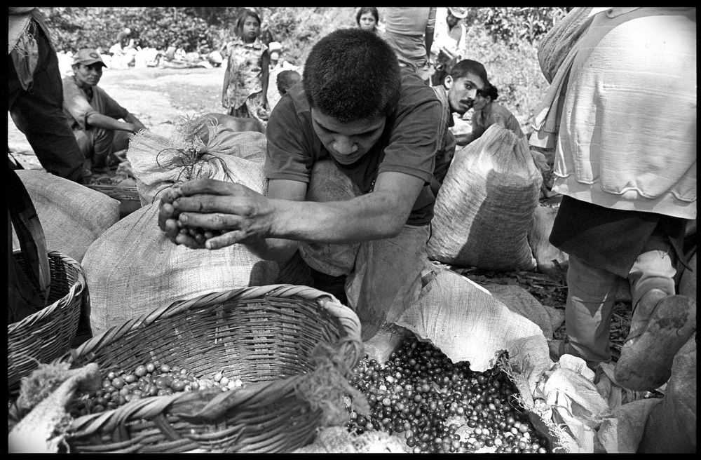 A worker seperates green beans from ripe coffee beans on the roadside between El Tuma and La Dalia, Nicaragua.