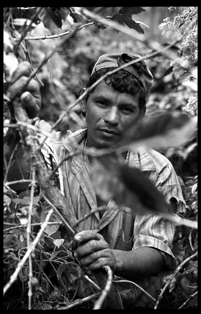 Worker on La Corona farm