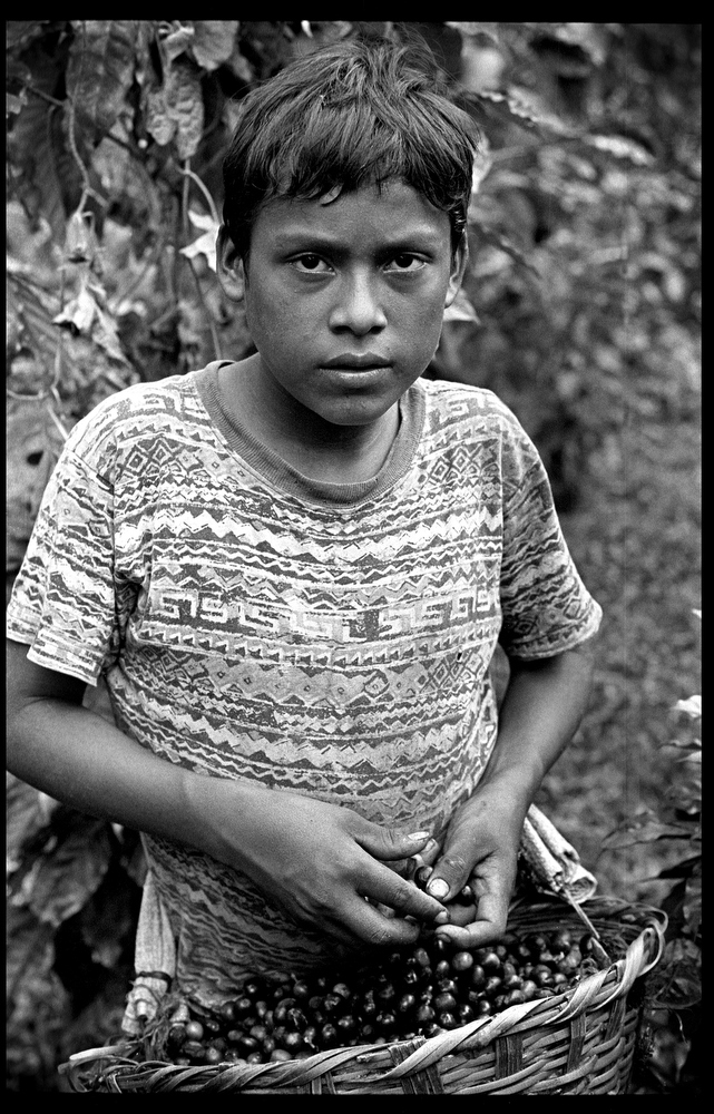 Wilmer Luna, 13, a coffee picker on La Corona farm. From the ages of 6-12 Wilmer cut and gathered wood. The teenager has never attended school.