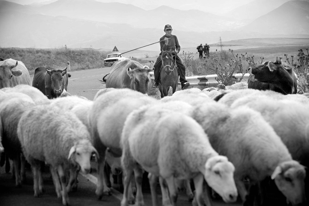 Young sheppard takes his sheep out to graze by the main road linking Armenia and Nagorno Karabakh.