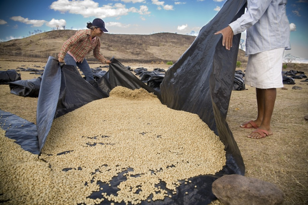 Workers at the Esperanza Coffee Group's drying mill cover beans for the night after they were left out to dry all day. The beans have specialty certification, so they are sold directly to buyers abroad, without having to go through a middleman.
