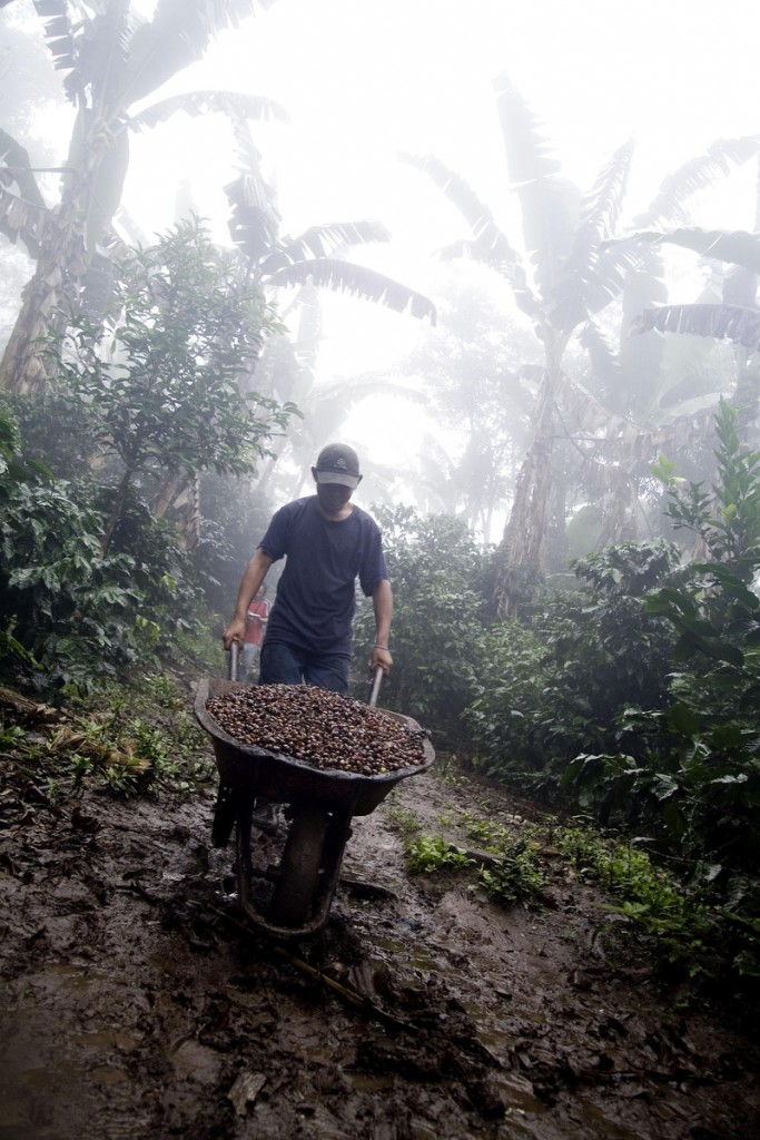 Noé Pao Arauz , son of the owner of Finca El Roble, a certified fair trade farm, does some chores.