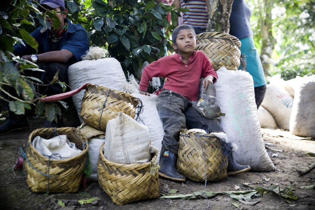 A child worker on Santa Rita, a large conventional farm, waits for his beans to counted at the end of a work day in the community of Datali/El Salto near Jinotega. Children under the age of 18 are not allowed to work on coffee plantations according to nicaraguan law.