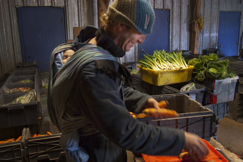 VDAFARM300 Charly, of Cadet Roussel organic farm, prepares CSA (community supported agriculture) baskets as son Gauloin has a cat nap. The farm delivers weekly baskets to their partners in the city. © Vincenzo D'Alto farm, ferme, fattoria, finca agriculture, agricultura, organic, biologique, organico, biologico, Land, tierra, terra, terre