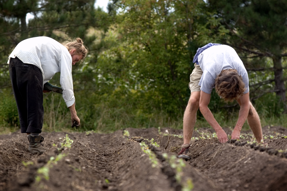 VDAFARM044 Eric and Richard, workers on the organic farm Cadet Roussel transplant broccoli by hand. Contrary to conventional farmiong, much of the work on organic farms is done by hand. Photo by Vincenzo dalto farm, ferme, fattoria, finca agriculture, agricultura, organic, biologique, organico, biologico, Land, tierra, terra, terre Photo by Vincenzo D'Alto