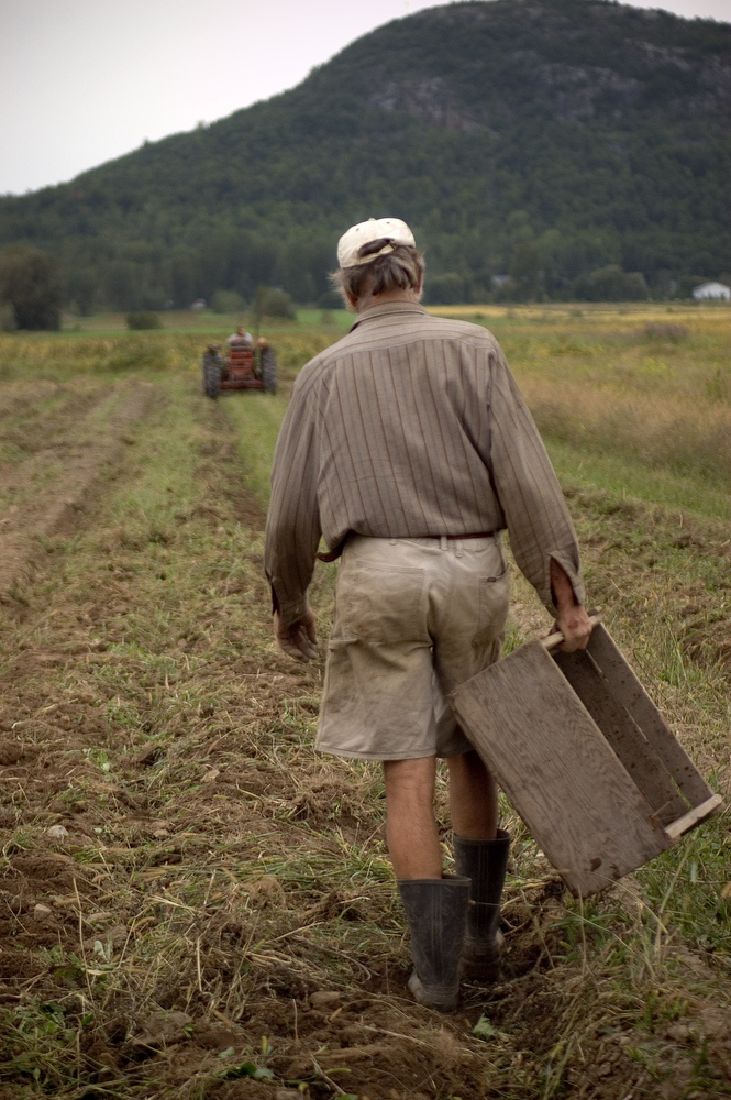 VDAFARM 102 Jean Roussel walks towards his tractor at the end of the day, days are long on an organic. Jean was raised on an organic farm in France, and has been farming organic since 1980 on his farm Cadet-Roussel located in St Gregoire Quebec. © Vincenzo D'Alto/GlobalAware farm, ferme, fattoria, finca agriculture, agricultura, organic, biologique, organico, biologico, Land, tierra, terra, terre tomato tomate